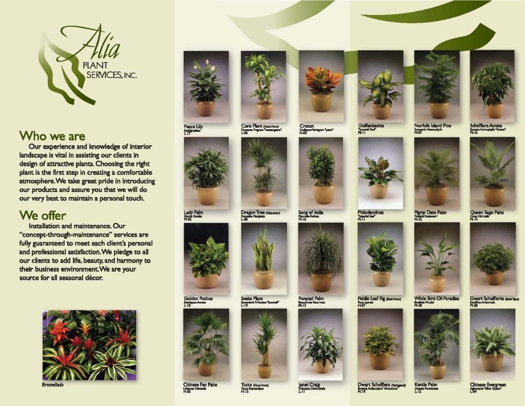Alia Plants Brochure Reverso
