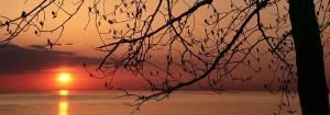 Foto de los árboles
